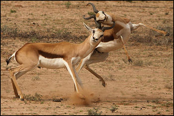 Duel took place near Houmoed waterhole