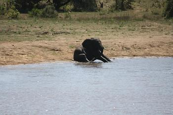 Seated Elephant taken on H7 (Nsamani Dam)