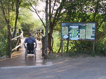 Skukuza Wetland Boarwalk (1)