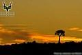 Augrabies - Landscape - Sunset with Quiver Tree