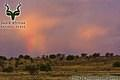 Mountain Zebra NP - Landscape - Rainbow