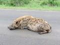 Hyena taken on H 10 close to Lower Sabie