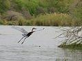 Goliath Heron was taken at Lake Panic near Skukuza