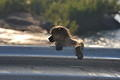 Baboon on a bridge near Skukuza photographed by Hennie de la Rey