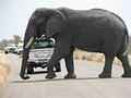 Elephant south of Mopani