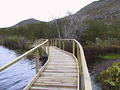 Silvermine Boardwalk (19)
