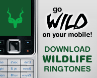 Go WILD on your mobile! Download Wildlife Ringtones