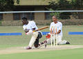 Cricket @ Skukuza 2016